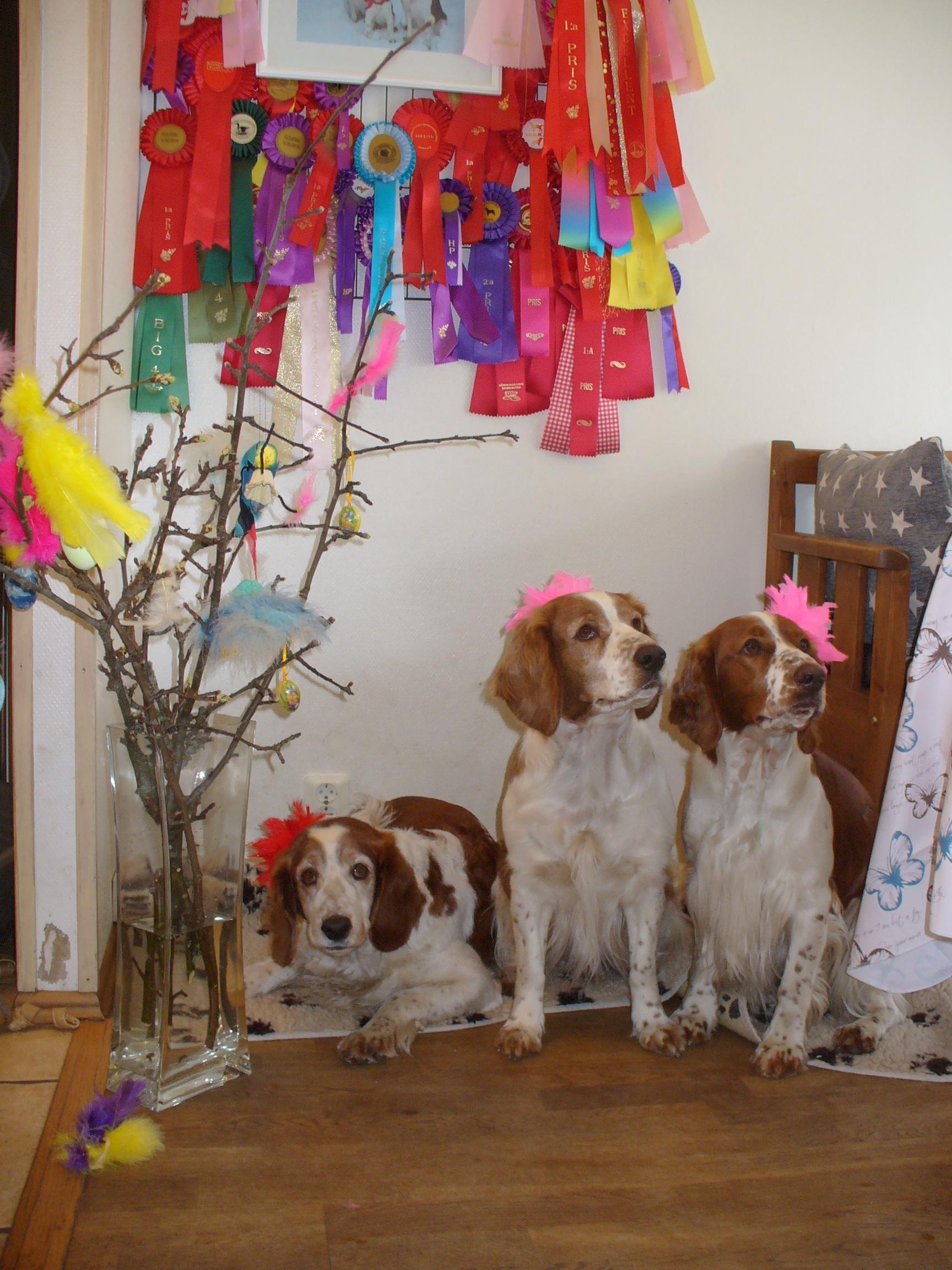 Stava, Jasmine och Elektra firar påsk