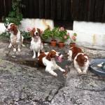 Vi besökte Rufus där blev det fika trimning och ett bad för hundarna. Här har jag ställt upp gänget.