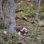 Hon gick runt trädet för att hitta klöven