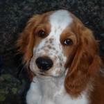 Porträttbild av Dio (augusti 2008)