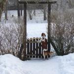 Tallkrogen, mars 2006